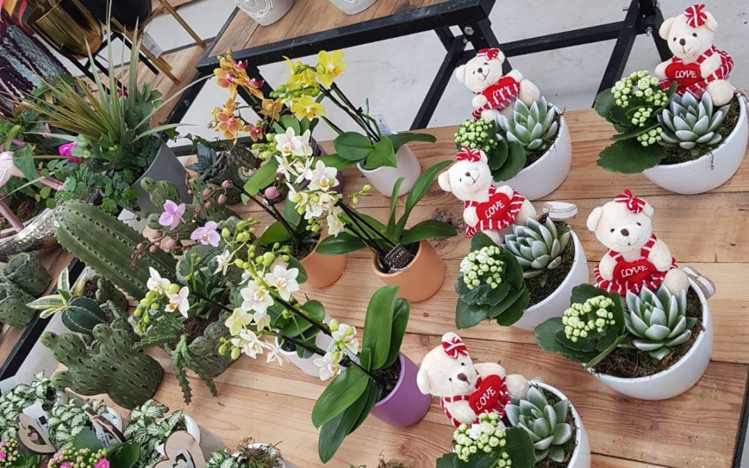 Plantas para decoración