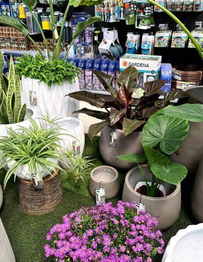 Plantas de interior y elementos de jardinería